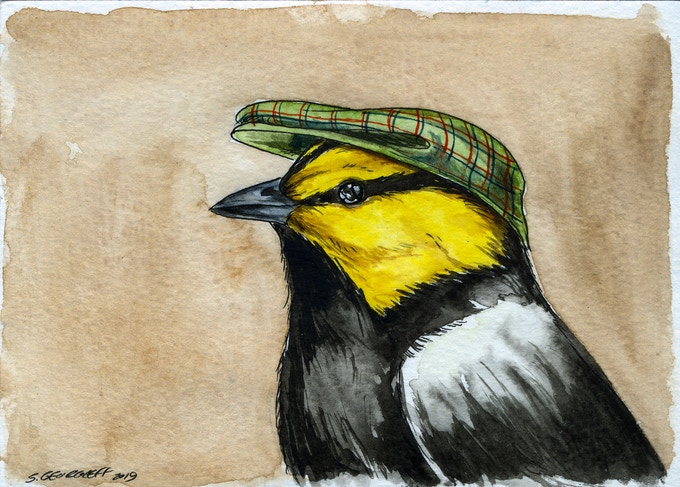 n0 2  Andy the  dapper Golden Cheeked Warbler