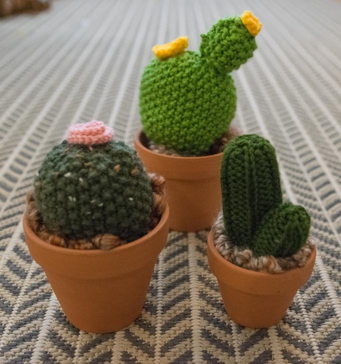 Large Cacti!