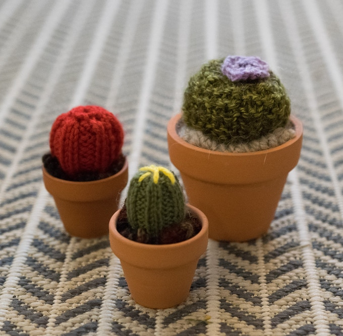 Mini Cacti (Left) and Small Cactus (Right)