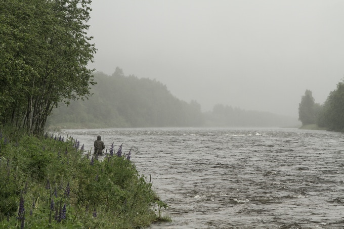 Fly fishing in June on the Gaula River, Norway