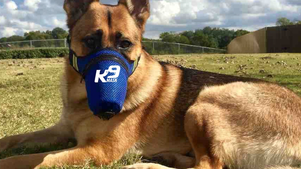 """World's First"" Air Pollution Mask for Dogs project video thumbnail"