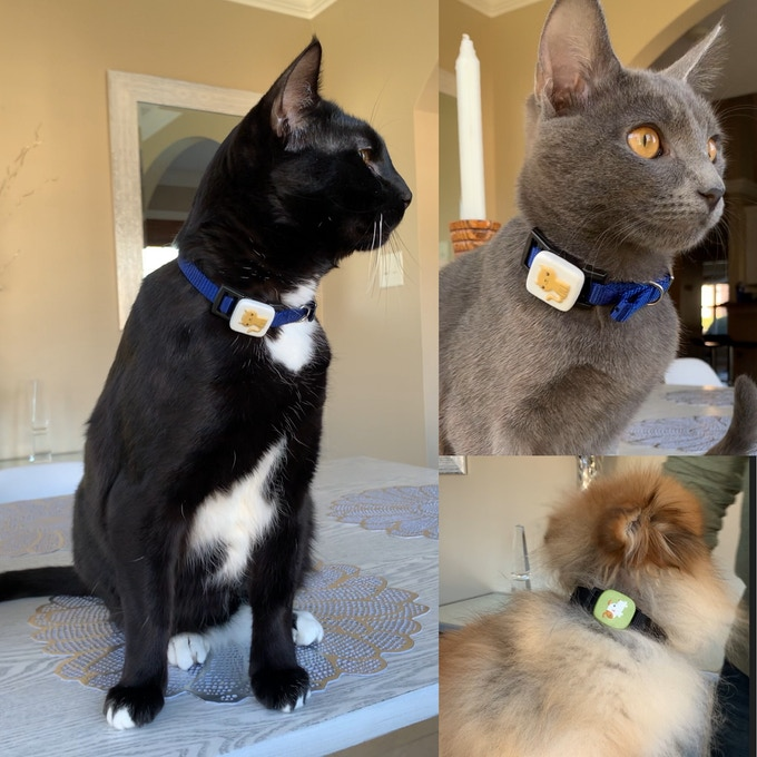 RADNA Pet, attaches directly to your pets collar.