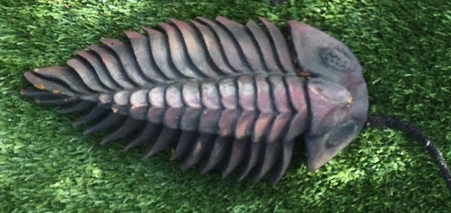 Screen used Trilobite # 2