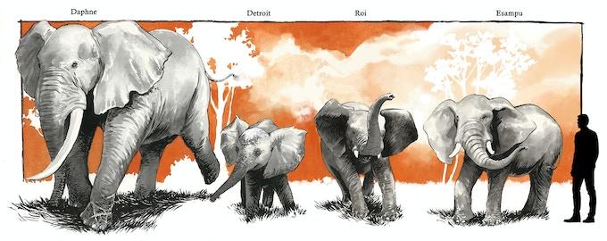 Meet our elephants