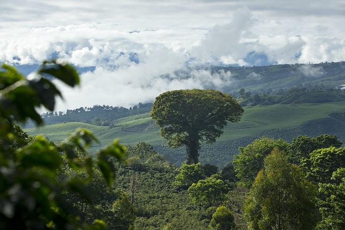 Aquiares coffee farm in Costa Rica