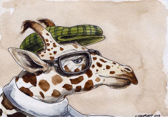 11 Nubian Giraffe