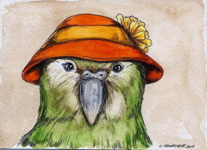 12 Kakapo