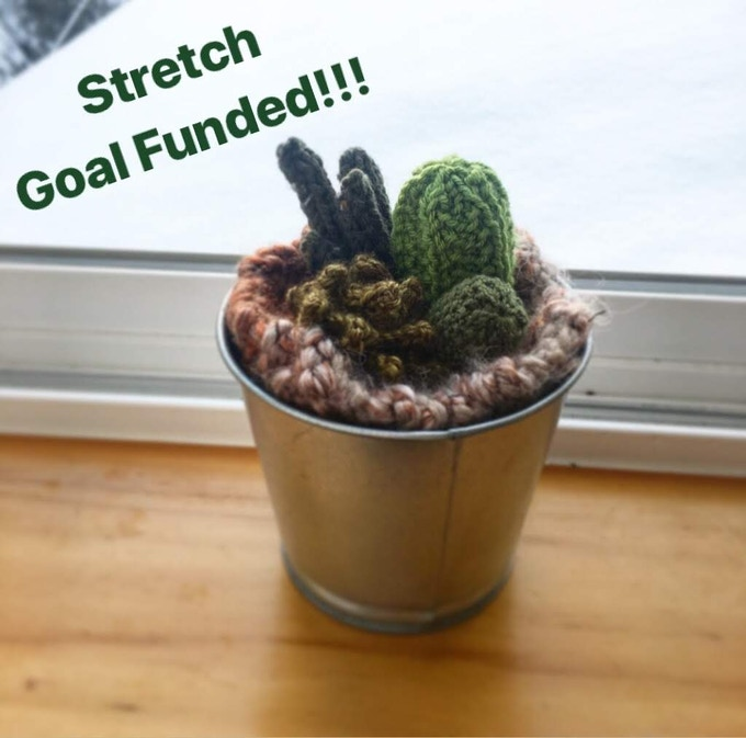Cactus Arrangement!