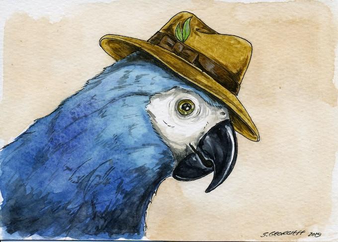 15 Brazilian Spix's Macaw