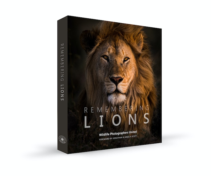 Remembering Lions, cover image by Federico Veronesi