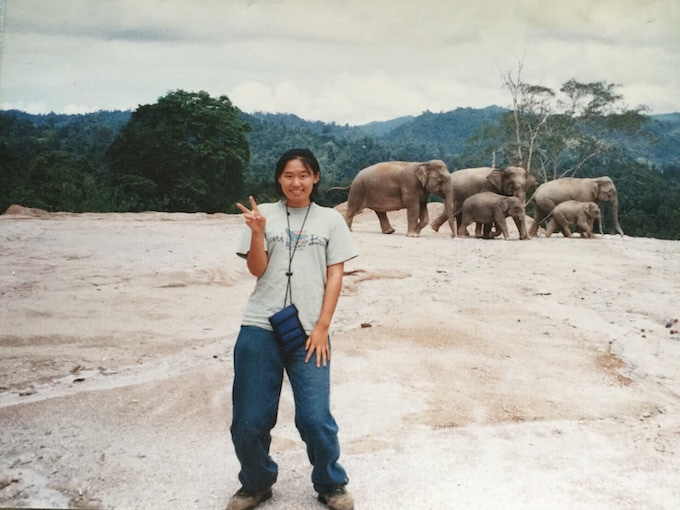 (picture with wild elephants in the jungles of Malaysia)  マレーシアのジャングルで野生象と共に