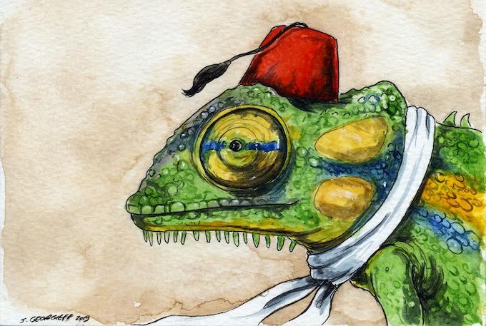 19 Madagascan Dwarf Chameleon