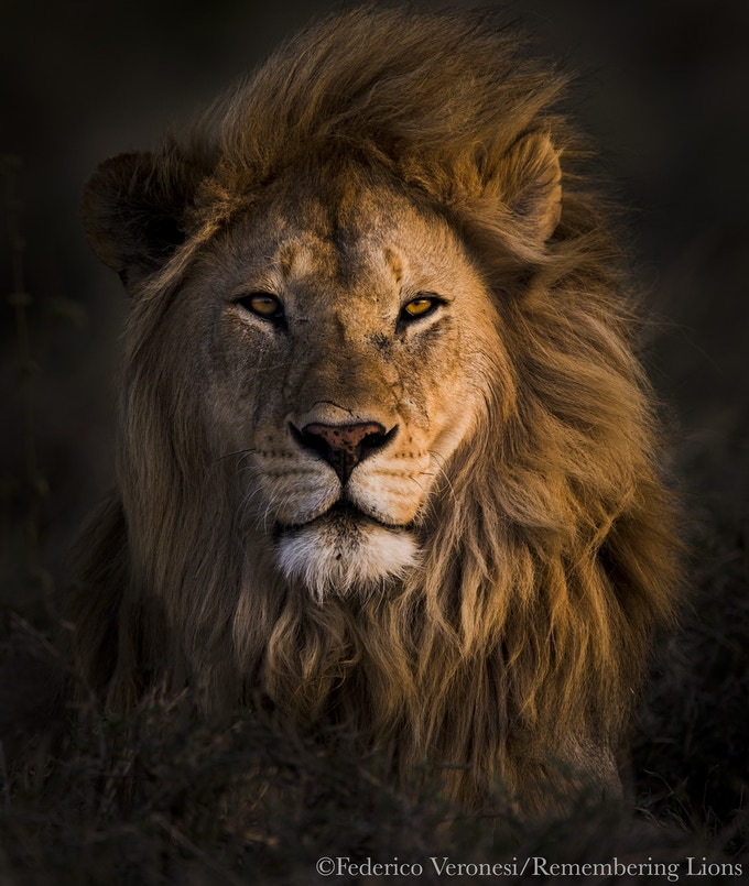 Remembering Lions cover image by Federico Veronesi
