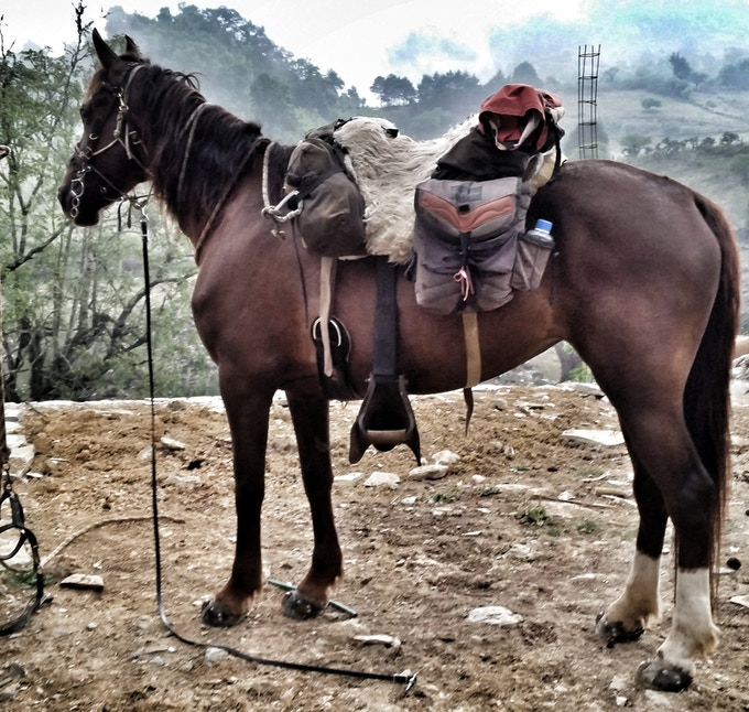 Every day is a new adventure. You have to be ready all the time, for the sake of your horse.
