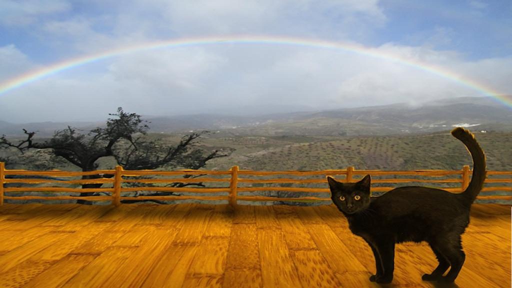 The Funky Kat Creative Wellness Retreat ~ Andalucía