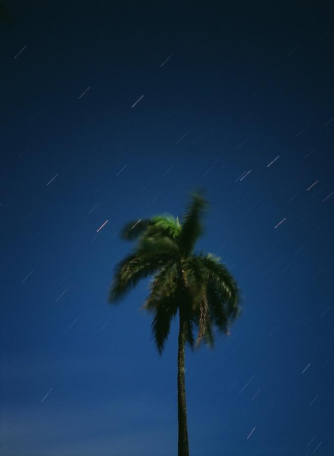 Looking up from The Hawaii Darkroom, Fuji Astia 100F
