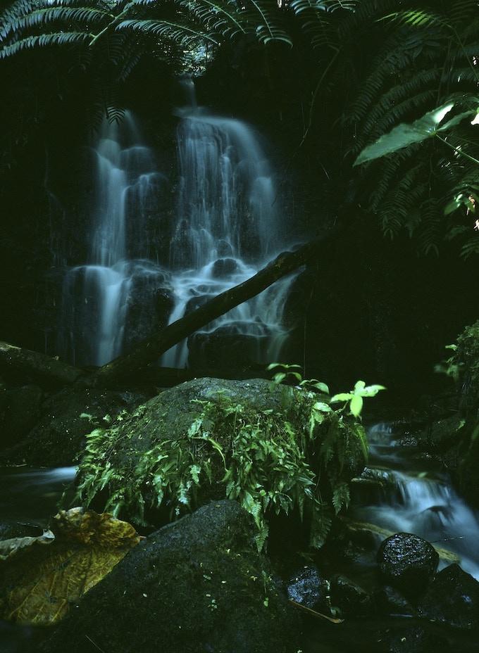 A little stream down the road from The Hawaii Darkroom, Fuji Astia 100F