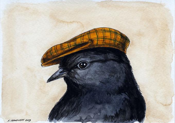 n0. 24 Black Robin