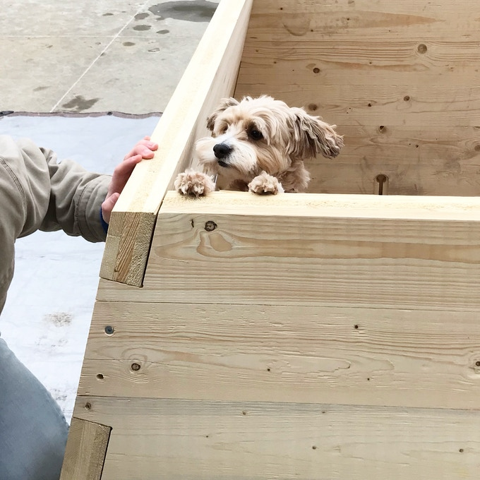 Our pup, Cody, helping out with the prototype assembly