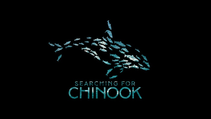 A short documentary following the endangered Southern Resident Orcas of the Salish sea and their depleting food source, Chinook Salmon
