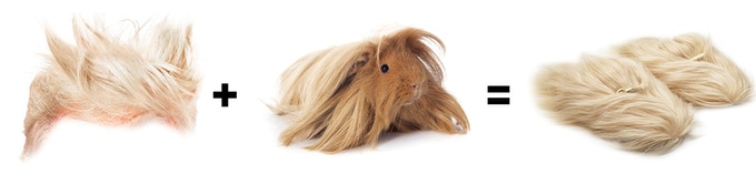Faux Trump hair and fake Peruvian guinea pig fur combine to make the fuzziest and coziest slippers EVER created!