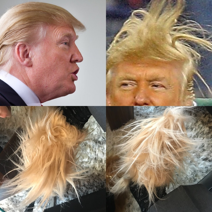 Covfefes can be styled in hair-raising ways to match every social situation encountered.