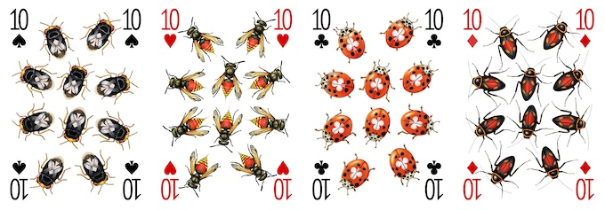 The four 10 designs for the Insecta deck - each insect has been drawn individually