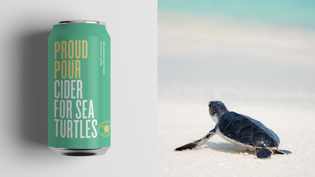 Cider for Sea Turtles project video thumbnail