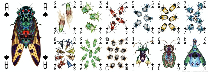 All of the Spades card designs in the Insecta Deck