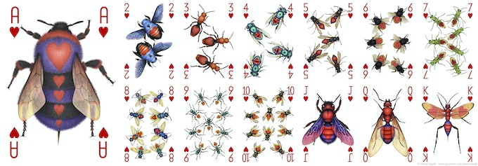 All of the Hearts card designs in the Insecta deck