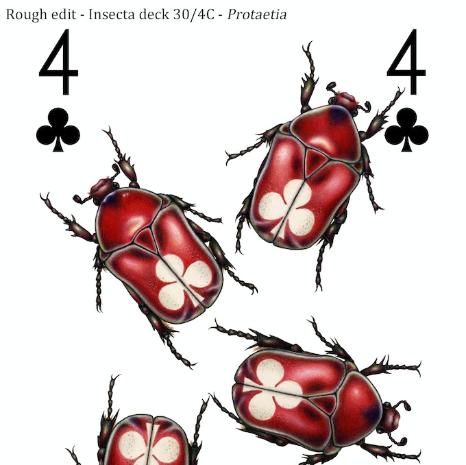 The initial scanned & cleaned drawing for the 4 of clubs, featuring a cherry red imaginary species of deck-dwelling chafer beetle in the genus Protaetia