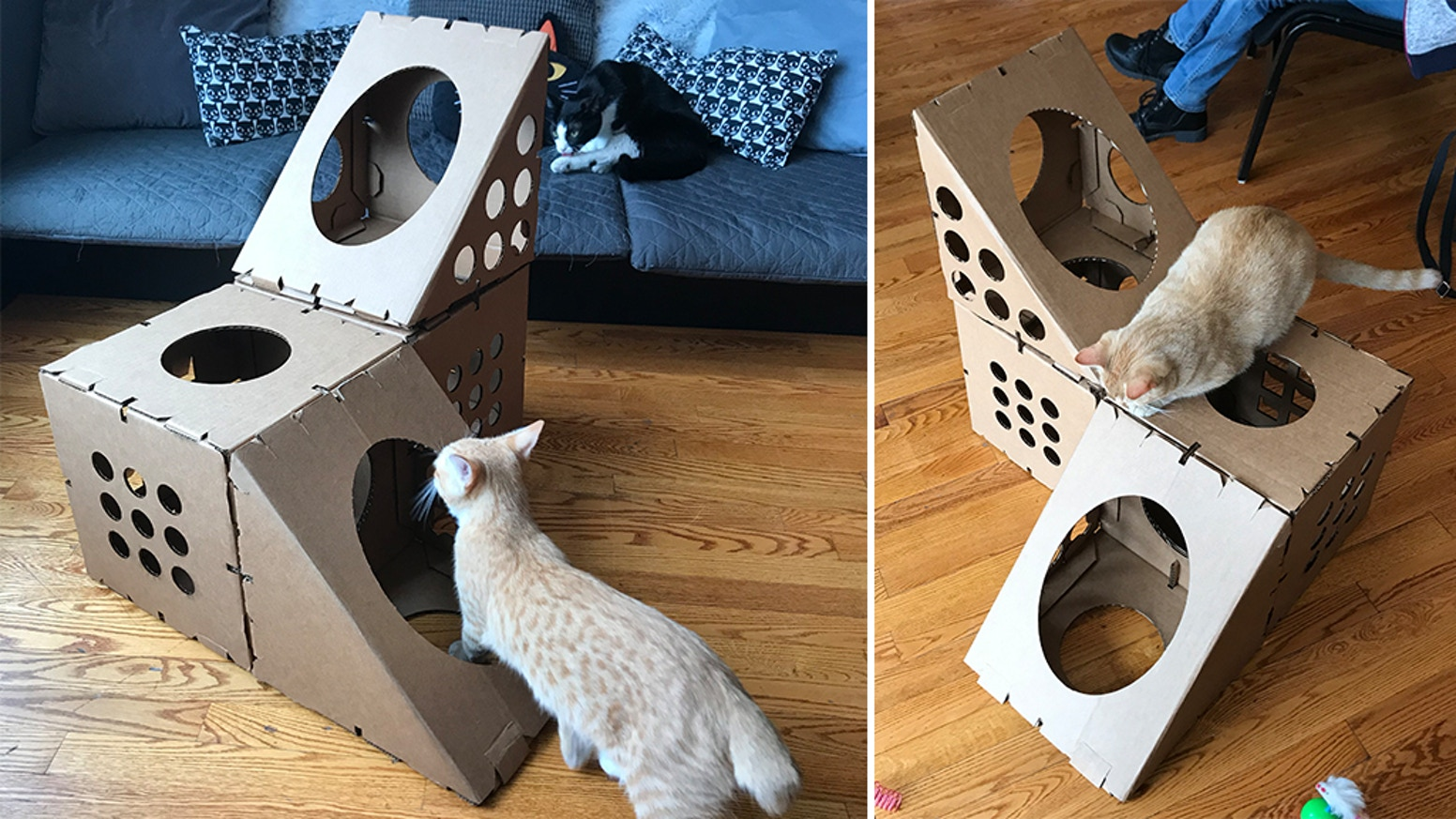 Cat boxes are designed to be PAWSOME for your kitties, and to help support shelters in Chicago keep doing their important work