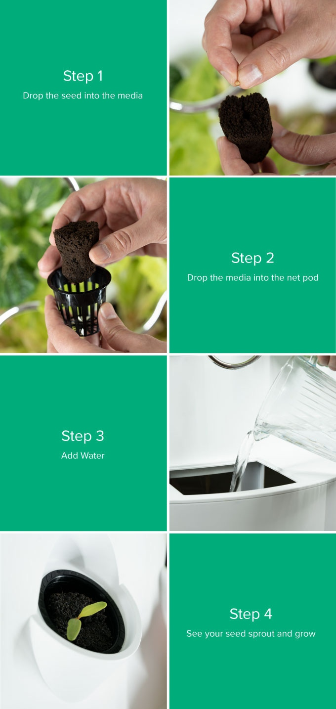Grow BIG, Beautiful Veggies & Fruits Indoors || iHarvest by Dave