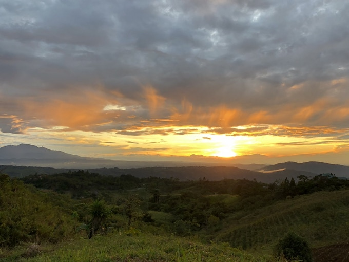 Sunrise view over the coffee fields at Tomo Yodo Farm