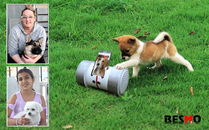 Besmo is the perfect friend for your dog to keep them entertained.