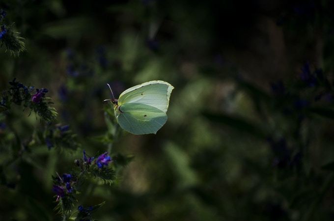 """#4 """"I dropped a little lower, found my way further into the foliage. Deeper into the butterfly's world where the play of wind and sun creates an ever-changing profusion of colours... a shape-shifting world of light and shadow."""" Chuck"""