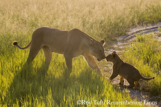 Lioness & cub inspiration by Roy Toft