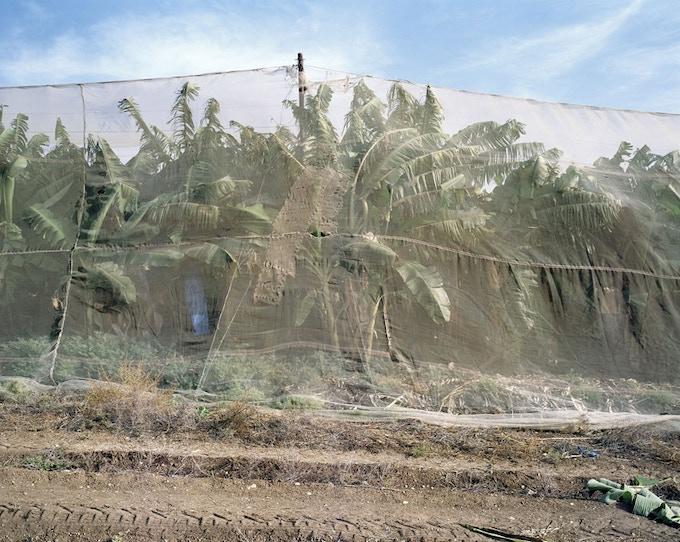 Plantation at the Sea of Galilae, Israel 2007