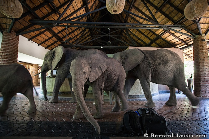 Mfuwe Lodge reception by Will Burrard-Lucas