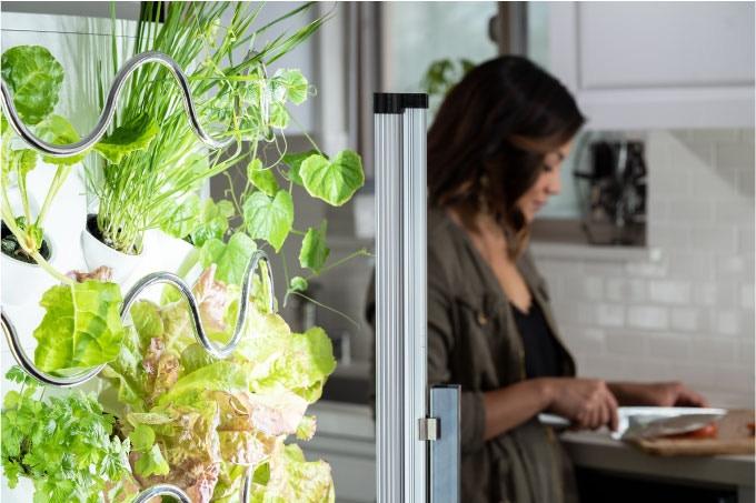 Grow BIG, Beautiful Veggies & Fruits Indoors || iHarvest by