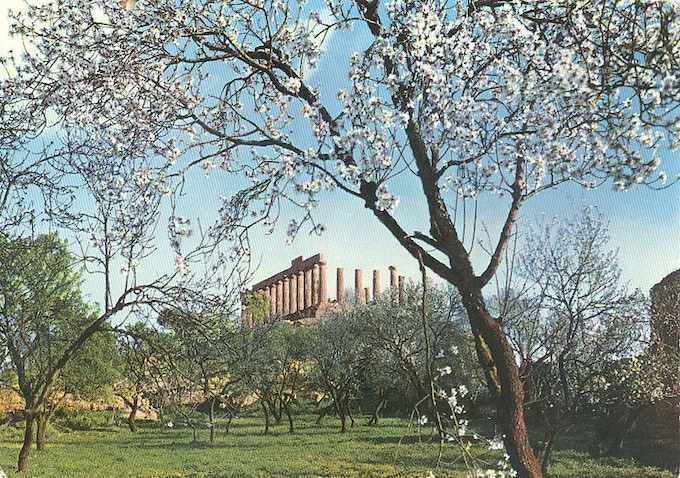 An almond tree in bloom near the Temple of Juno, Agrigento, Sicily (Source: WEB)