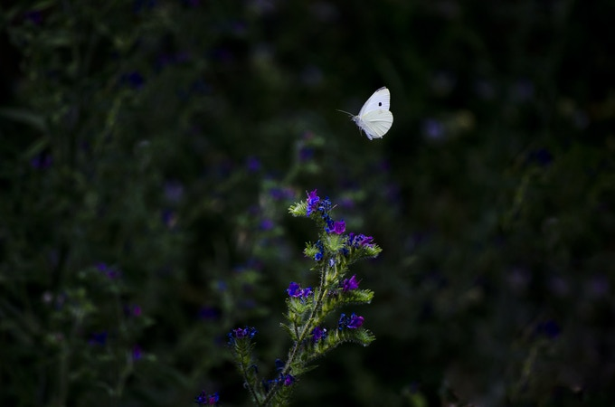 #11 What the caterpillar calls the end, the rest of the world calls a butterfly.  Lao Tzu