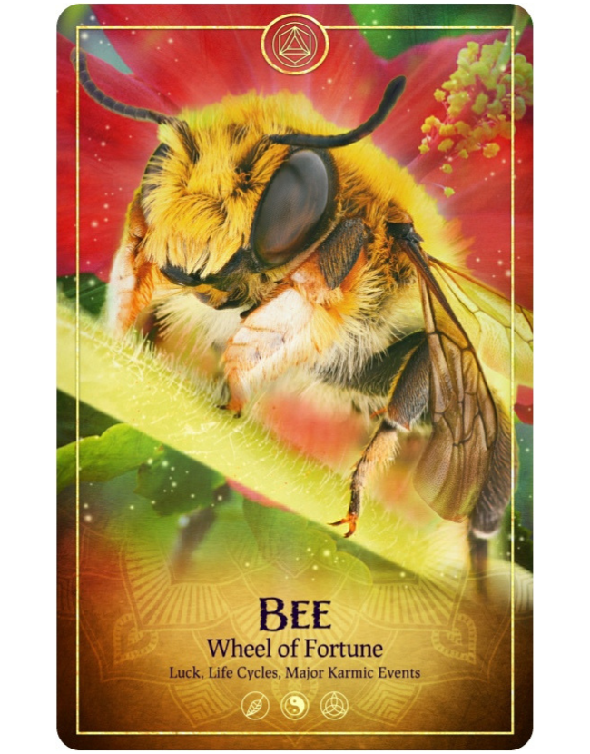 The Wheel of Fortune Tarot Card from The Ark Animal Tarot & Oracle Deck