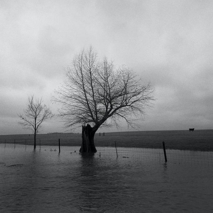 tree in water, Missouri winter, 2004