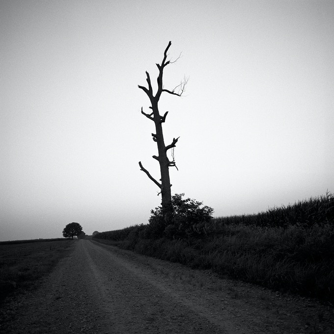 dead tree, Missouri winter, 2005