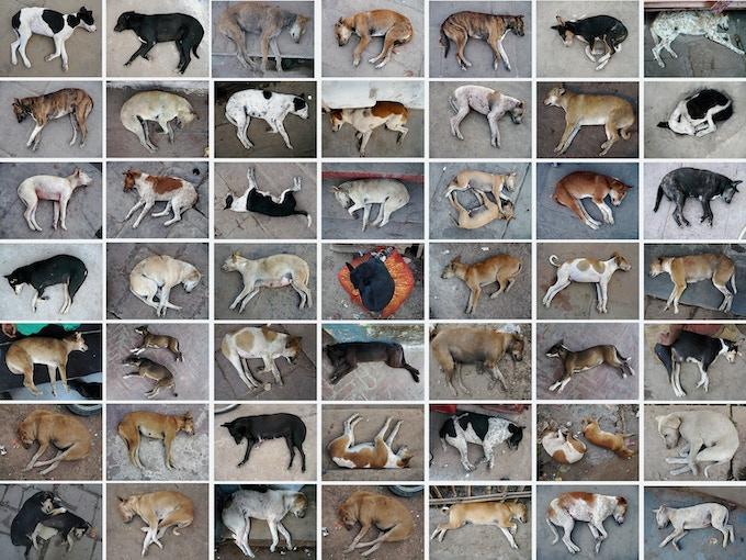 stray dogs, Varanasi, India 2012