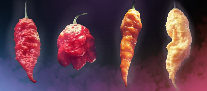 Monstrous and Flavorful Chilli Peppers You Can Grow by
