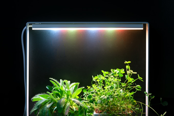 Optimized light spectrum for herbs - 12 hours day-and-night cycle - low energy consumption (6 euro of electricity per year).