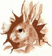 A picture of the head of a rabbit, drawn. Represents Sel.