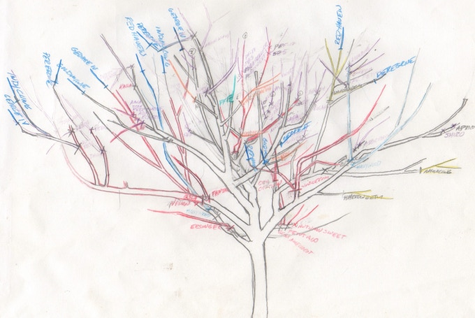 Artist's diagram showing the multiple grafts on a single tree